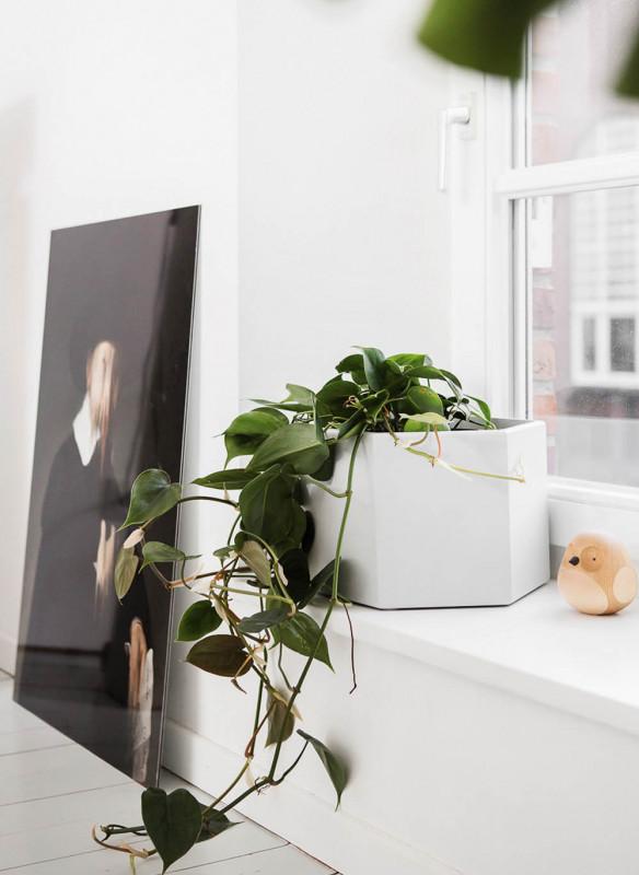 Best of interior die wohntrends 2018 stubenblog - Rankpflanzen zimmer ...